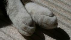 Ballerina cat feet