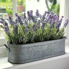 pflanzen im schlafzimmer LOOK: 7 Best Indoor Plants Ideas To Produce Positive Energy At Home Best Indoor Plants, Indoor Planters, Cool Plants, Outdoor Plants, Indoor Window Garden, Large Plants, Outdoor Gardens, Indoor Plant Pots, Indoor Gardening