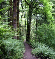 Forest Park in Portland.  tpdahlia.blogspot.com