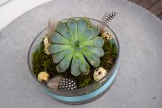Påskepynt med sukkulent | Dora Dekorasjon Succulents, Plants, Design, Creative, Succulent Plants, Plant, Design Comics, Planting