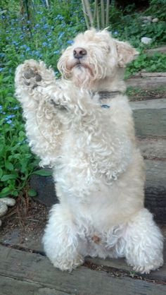 i throw my paws up in the air sometimes singing eeehhh ohhh