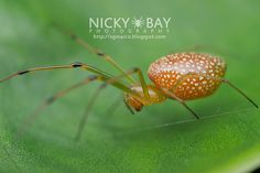 Nicky bay photos of mirrored spiders