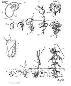 Parts of flowers worksheet teaches sexual reproduction in