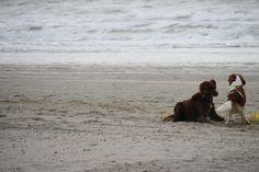 Playtime! Beach 's Gravenzande, The Netherlands. Copyright: Van Geerdersbeek Photography.
