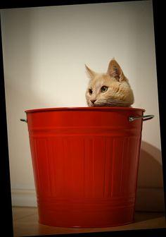 funny cat:)