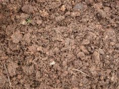 Organic Garden Soil: The Importance Of Soil For An Organic Garden - A successful organic garden is dependent upon the quality of the soil. This article has ideas to help you provide the nutrients your soil needs for an abundant harvest. Click here to learn more.