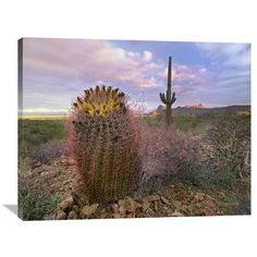 Global Gallery Nature Photographs Saguaro And Giant Barrel Cactus, Saguaro National Park, Arizona by Tim Fitzharris Photographic Print on Wrapped C...