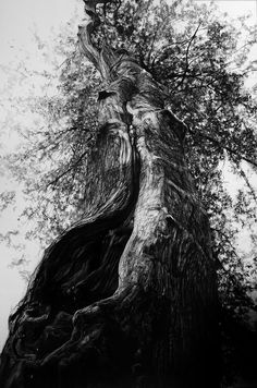 Community wall photos Je suis comme cet arbre — Photo — Afficher l'image d'origine. Landscape Drawings, Landscape Art, Landscape Paintings, Art Drawings, Plant Sketches, Tree Sketches, Forest Drawing, Drawing Trees, Storyboard
