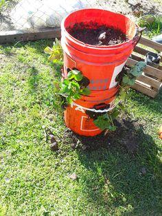 Cultivo Vertical de fresas