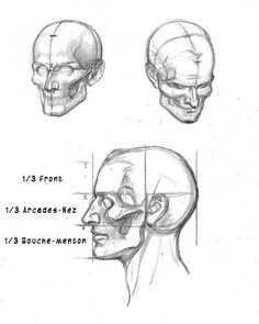 dessin-anatomie-visage