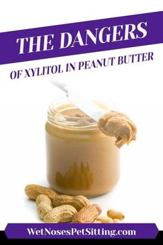 The Dangers of Xylitol in Peanut Butter - Wet Noses Pet Sitting Best Cheap Dog Food, Best Dog Food, Dry Dog Food, Salmon And Sweet Potato, Sweet Potatoes For Dogs, Peanut Butter For Dogs, Cat Sitter, Pet Sitting