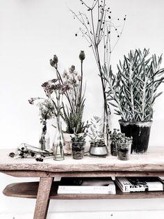 Urban Jungle Bloggers: Plants & Flowers by @GittteChrist