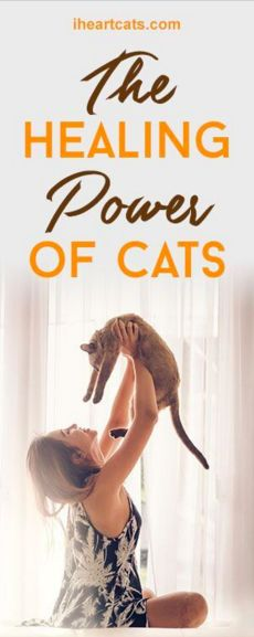The Healing Power Of Cats