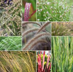 Gräser hegen und pflegen