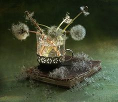 This is dandelion tea....... an essential fairy beverage, and a book of fairy spells.
