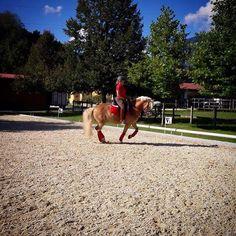 Progress  #dressagehafl #hafl #haflinger #dressagehorse #training #matchingoutfits #workcation #summer17 #arena #horsebloggers #haflingersofinstagram #horsesofinstagram