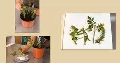 Esquejes o gajos para reproducir plantas