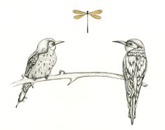 Courting - An illustration depicting the bee catchers courting ritual. These cuties sit on a brach and feed each other insects till they fall in love.