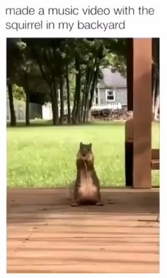 funny animal memes Look out Alvin, theres a new chipmunk in town, and hes a squirrel! Funny Animal Memes, Funny Animal Videos, Cute Funny Animals, Funny Animal Pictures, Cute Baby Animals, Funny Cute, Animals And Pets, Animal Humor, Funny Photos