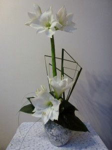 Amaryllis blanches Feuillage