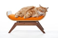 Canopy Lounge Pet Bed Cat Dog Mid Century Modern Eames Bent Plywood Furniture