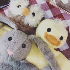 Bunny is hanging out with some pals before the big weekend delivering Easter eggs  #2016 #easter #easterhunt #easterbunny #bunny #organiclife #baby #toys #appleparkaustralia #love #organiccotton #naturalsilk #polyfreenursery #polyfree #nursery