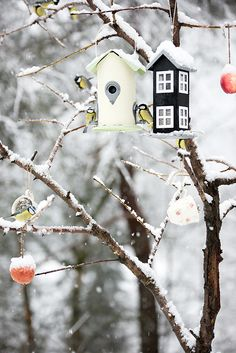 Birdhouses hanging in the tree look charming for Christmas...