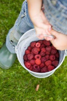 Country Red - Freshly picked raspberries.