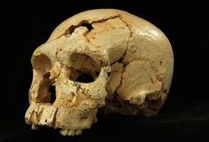 Skulls with mix of Neandertal and primitive traits illuminate human evolution