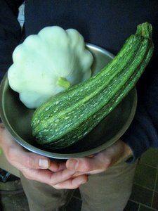 Benning's Green Tint Patty Pan Squash