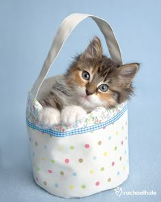Rachael Hale's pic of the day: Poppy. Poppy travels lots in her comfy bag of dots!