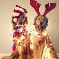 """""""You look silly in that Santa hat, Buddy!! Ha Ha!!"""" """"Quiet, Max. Just smile so we can get this photo shoot over with."""""""