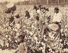Slaves picking cotton before the Civil War.