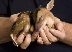 Peaceful Little deer