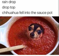 hilarious 34 Laugh Out Loud Memes That Are Just Awesome Memes Humor, Top Memes, Funny Humour, Meme Meme, Disney Memes, Funny Animal Pictures, Funny Animals, Funny Cute, Hilarious