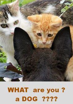 amazed kitten #Fotograf: CaWo #kitty kitties cat cats pet pets fluffy animal animals red dog black sweat nature cute funny