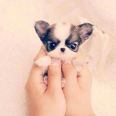 Cuteeeee dog ❤❤❤