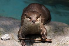 Wizard otter takes a break from spell practice - September 9, 2014