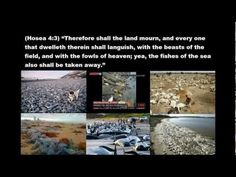 ▶ MASS FISH/ANIMAL/SEA LIFE DEATHS SWEEPING THE WORLD! (2011-2012) END TIMES PROPHECY SIGNS! - YouTube ... Hosea 4 & Zephaniah 1