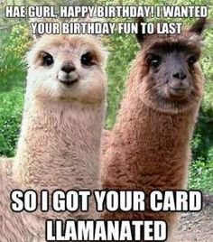 Are you looking for inspiration for happy birthday funny?Check this out for cool happy birthday inspiration.May the this special day bring you fun. Happy Birthday To Me Quotes, Funny Happy Birthday Meme, Happy Birthday Best Friend, Happy Birthday Images, Birthday Memes, Birthday Wishes, Birthday Crafts, Happy Birthday Llama, Birthday Ideas
