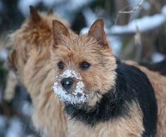 Norwich in snow