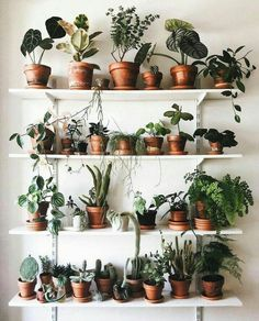 Houseplant Decor In NYC Lower East Side Apartment Tour - plant party - Plants Plant Wall, Plant Decor, Cactus Decor, Home Decoracion, Plant Aesthetic, Decoration Plante, Bedroom Plants, Plant Rooms, My New Room