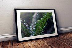 fern greenery flora redwood forest california oregon Fine Art Photography, Travel Photography, Redwood Forest California, Northern California, Ferns, Order Prints, Greenery, Oregon, Flora