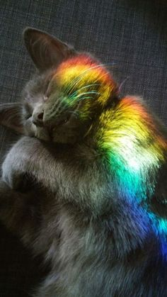 "rainbowwhimsyart: ""Throwback to when Loki Treecat Muffinbaby Trouble Bubble Bunny Rabbit Bug Buggie Budgie Axberg fell asleep in a rainbow. He was just Loki Treecat at that point. Cute Kittens, Fluffy Kittens, Cats And Kittens, Ragdoll Kittens, Tabby Cats, Bengal Cats, Fluffy Cat, Kitty Cats, Wallpaper Gatos"