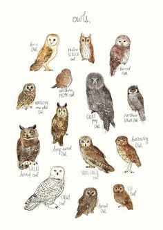 Owls Art Print by Amy Hamilton