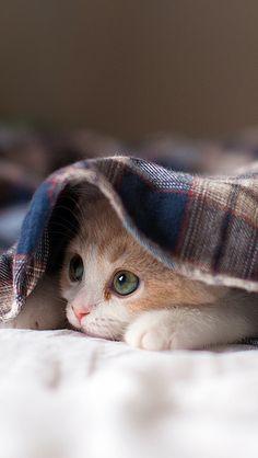cat_lying_kitten_playful_91882_640x1136 | Flickr - Photo Sharing!