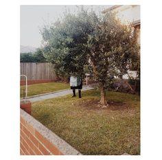 Sélection Instagram #74 // © Boyco Boychev // Retrouvez la sélection complète sur le site de #FisheyeLeMag ! #instagram #curation #photo #photography #streetphotography #streetphoto #garden #gardening #tree #photooftheday #picoftheday #potd