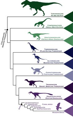 A Simple Chart to Help You Understand How Birds Evolved from Dinosaurs - Biology
