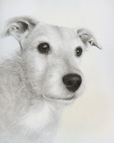 Graphite drawing of a terrier