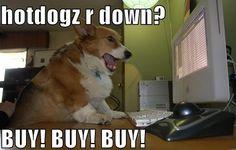 Best Corgi Memes (Part 2) | Corgi Dogs